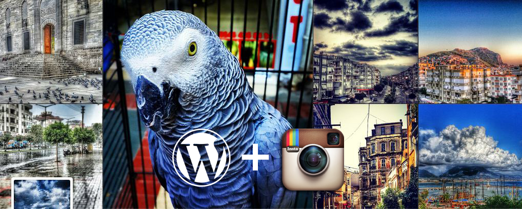 WordPress İçin Instagram Widget